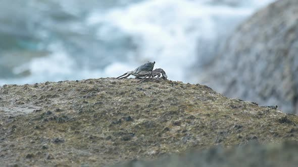 Thumbnail for Crab on the Rock