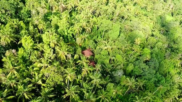 Thumbnail for Drone Shot of Houses Surrounded by Dense Jungle