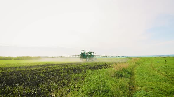 Spraying a Green Wheat Field By Tractor