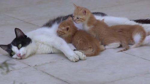 Mother Cat Breastfeeding Her Kitten On A Concrete Floor 7