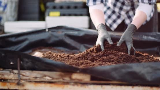 Thumbnail for Gardener Examining Soil in Hands