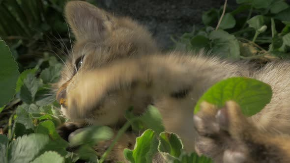 Kitten fighting  against garden plants 4K 3840X2160 UHD footage - Garden plants destroyed by little
