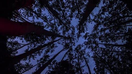 Astro Timelapse through trees
