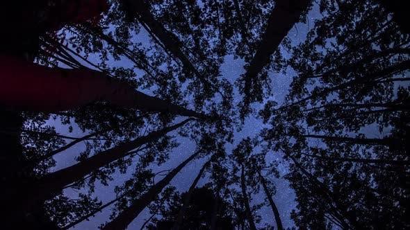 Thumbnail for Astro Timelapse through trees