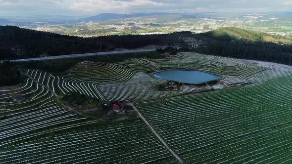 Thumbnail for Drone Shot of Plantations