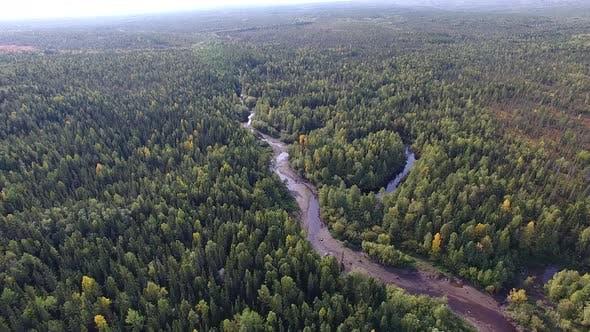 Thumbnail for Petite rivière dans la forêt de conifères