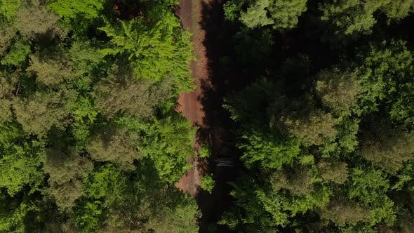Thumbnail for Slow Overhead Top Down Drone Shot of Dirt Trail in Rich Green Forest in Germany European