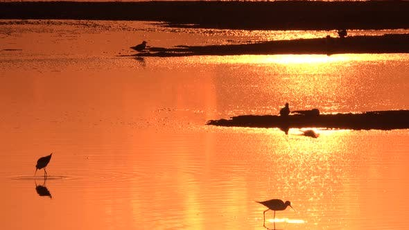 Thumbnail for Reflection of the Bright Orange Sunset on the Water Surface with Birds on the Sand.