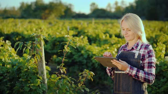 Thumbnail for Happy Female Farmer Uses a Tablet Near Her Garden