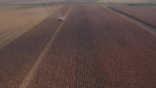 Harvesting Cornfield Autumn
