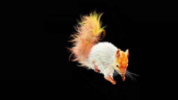 Thumbnail for Squirrel Dancing HD