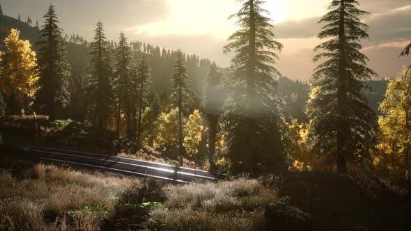 Thumbnail for Sonnenaufgang im Herbstwald