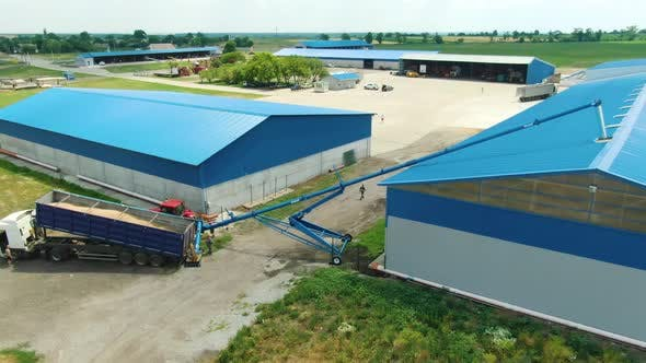Harvested Wheat Is Being Poured Into the Storage Facility From a Truck