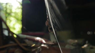 The Web Spider Sun Flare