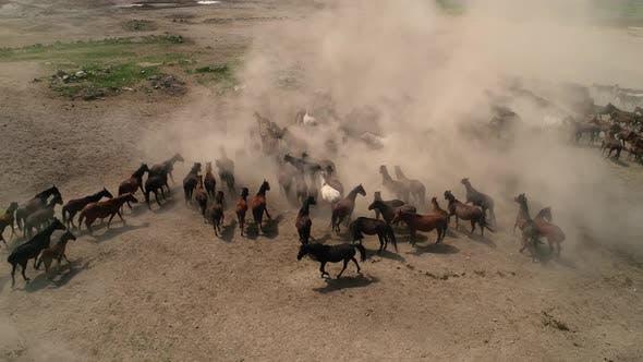 Thumbnail for Herd Horse