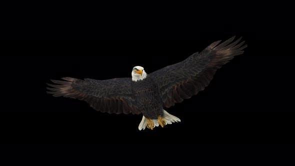 Thumbnail for 4K Eagle Gliding