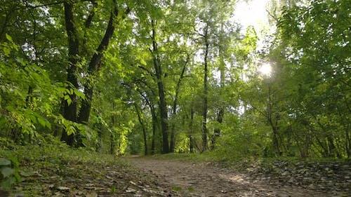 Sonnenwald im Oktober