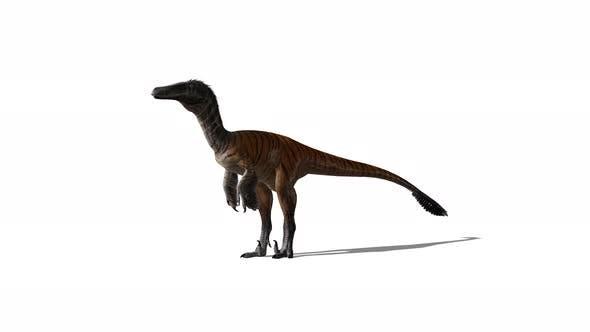 Dinosaur Idle
