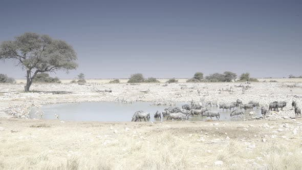 Thumbnail for Calm But Crowded Waterhole