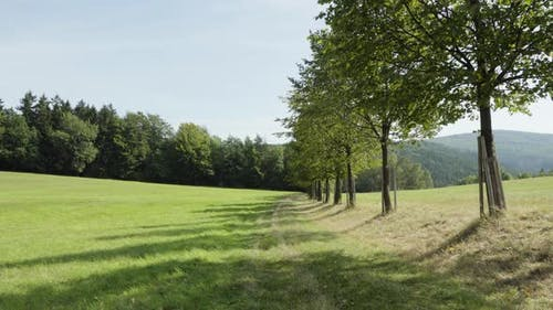 A Line of Leafy Trees Surrounded By Meadows and Fields, Hills in the Background.