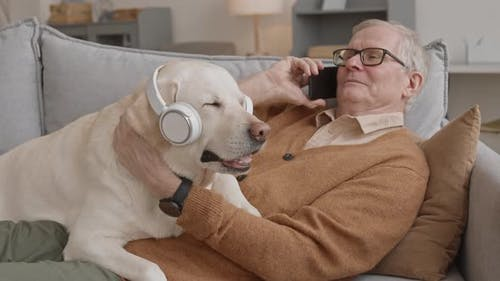 Labrador Retriever in Headphones