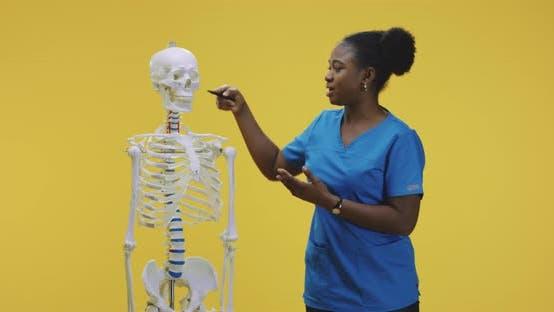 Thumbnail for Doctor Explaining Anatomy with Skeleton