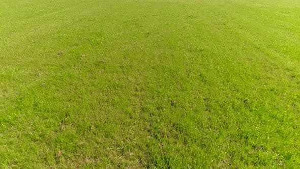 Thumbnail for Flying Over Green Grass Field