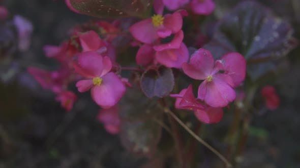 Thumbnail for Beautiful Flowers in Motion