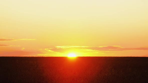 Thumbnail for Sunset Over Golden Wheat Field in Time-lapse. Sun Goes Down Behind Horizon. Ripe Ears of Wheat