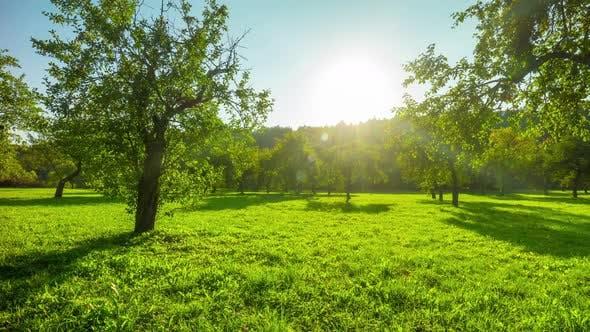 Thumbnail for Apple Autumn Orchard