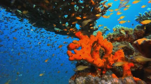 Underwater Red Sponge