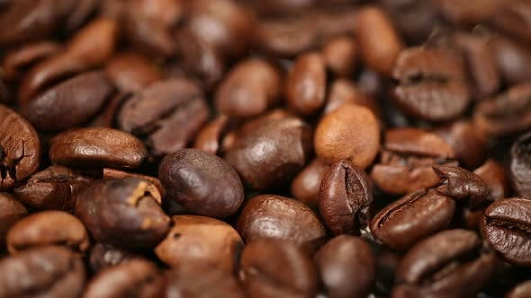 Coffee Production, Select Beans of High Quality Arabica and Robusta Species