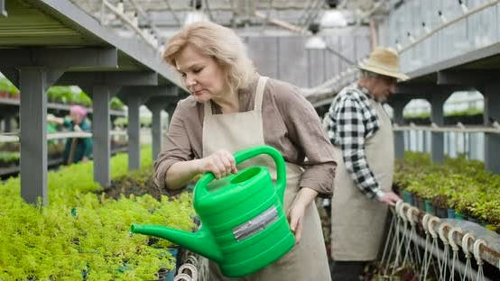 Thumbnail for Portrait of Confident Mature Caucasian Woman in Apron Pouring Water on Plants in Pots