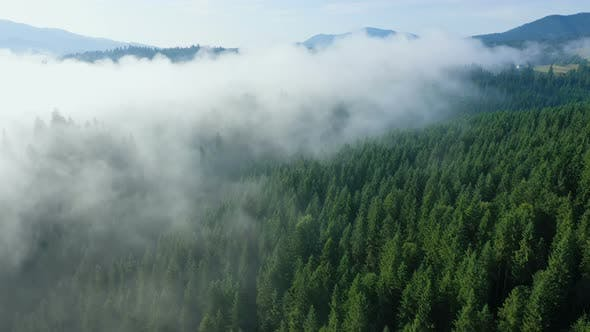 Thumbnail for Fog At The Pine Forest At The Mountains