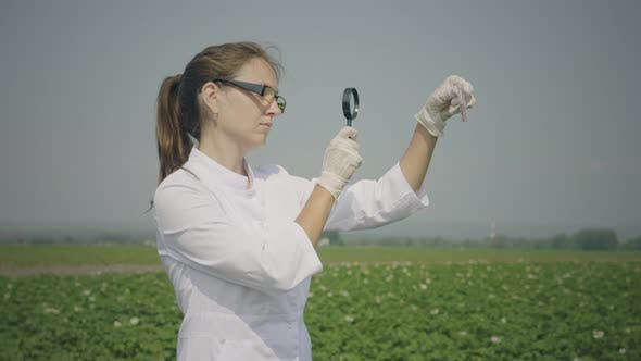 Thumbnail for Female biologist inspecting pests