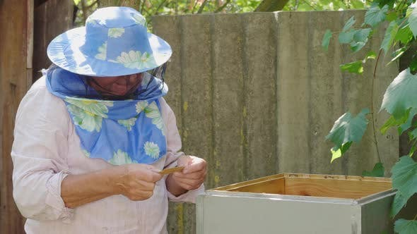 Thumbnail for An Elderly Beekeeper Working in an Apiary Near the Hive