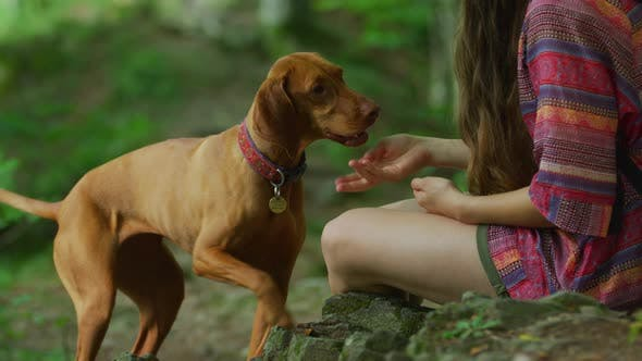 Thumbnail for Girl training a dog