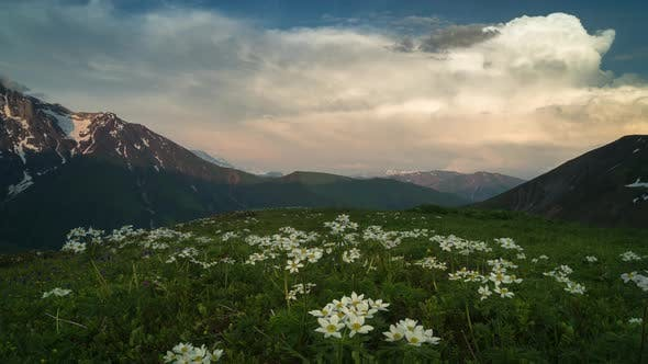 Thumbnail for Time-lapse of the Dusk in Mountains. White Flowers on the Foreground