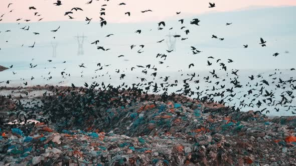 Birds are Flying Overgarbage Hill