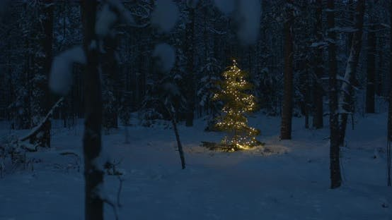 Thumbnail for Christmas Tree with Lights Forest