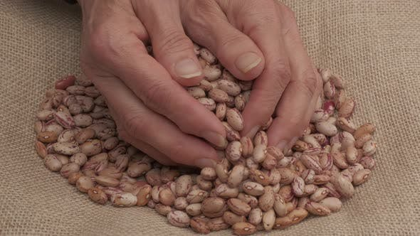 Hand Giving Beans Legumes Organic Agriculture