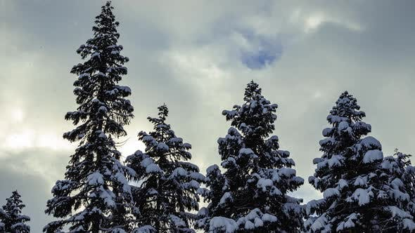 Snowy Trees And Overcast Rolling Clouds In Snowfall Time Lapse