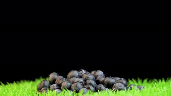 Thumbnail for Blueberries on grass surface against black background. Studio shot of ripe blueberries