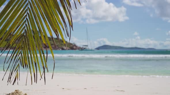 Thumbnail for Peaceful View of Palm Tree Slightly Swaying in Breeze Air, Sandy Beach and Defocused Yacht Ocean