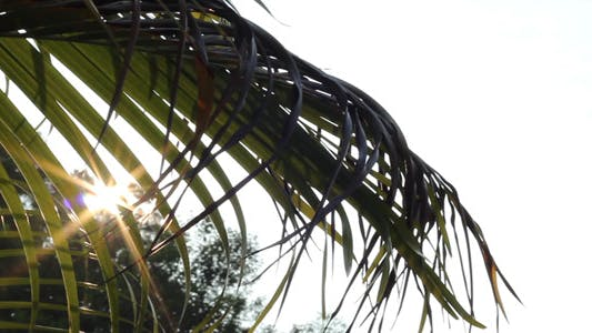 Sliding Sunshine Through Palm Leaves 1