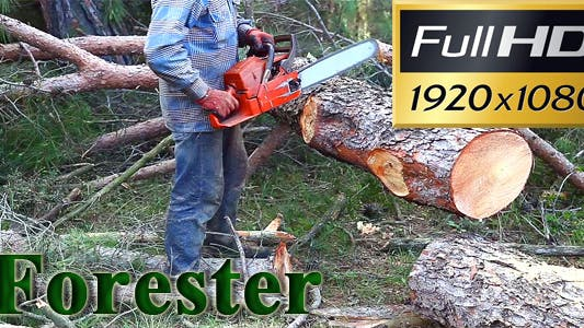Thumbnail for Forester Cutting A Tree