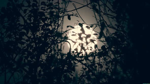 Thumbnail for Full Moon In The Dark Sky With Silhouettes Of Tree Branches