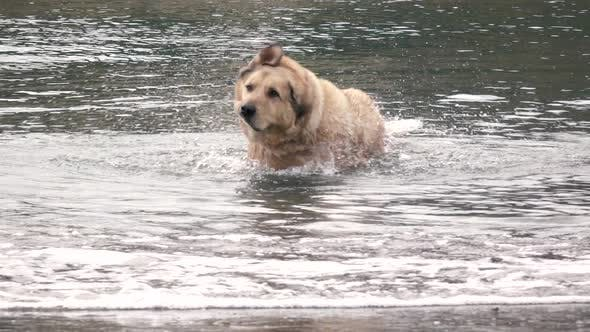 Thumbnail for Dog In The Water Shaking Off