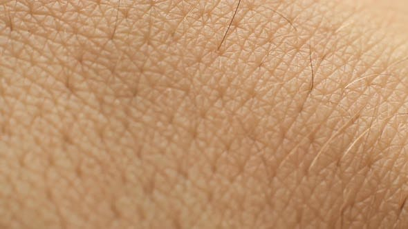 Thumbnail for Human Skin 3