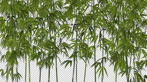 Bamboo Shrubs - Windy Loop - II